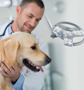 Visiano-dog veterinary lighting brochure